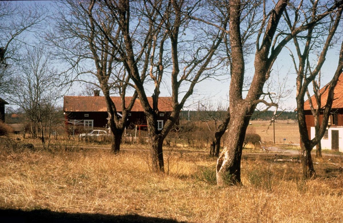Gårdsmiljö, Lejsta, Rasbo socken, Uppland 1975