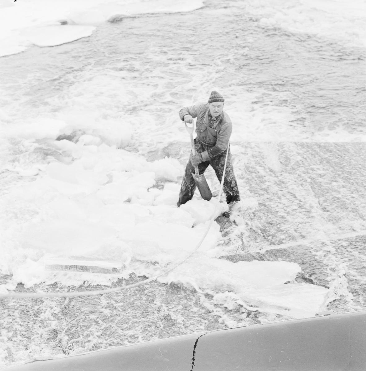 Islandsfallet - Kalle Westergren jobbar med isen, Uppsala december 1961