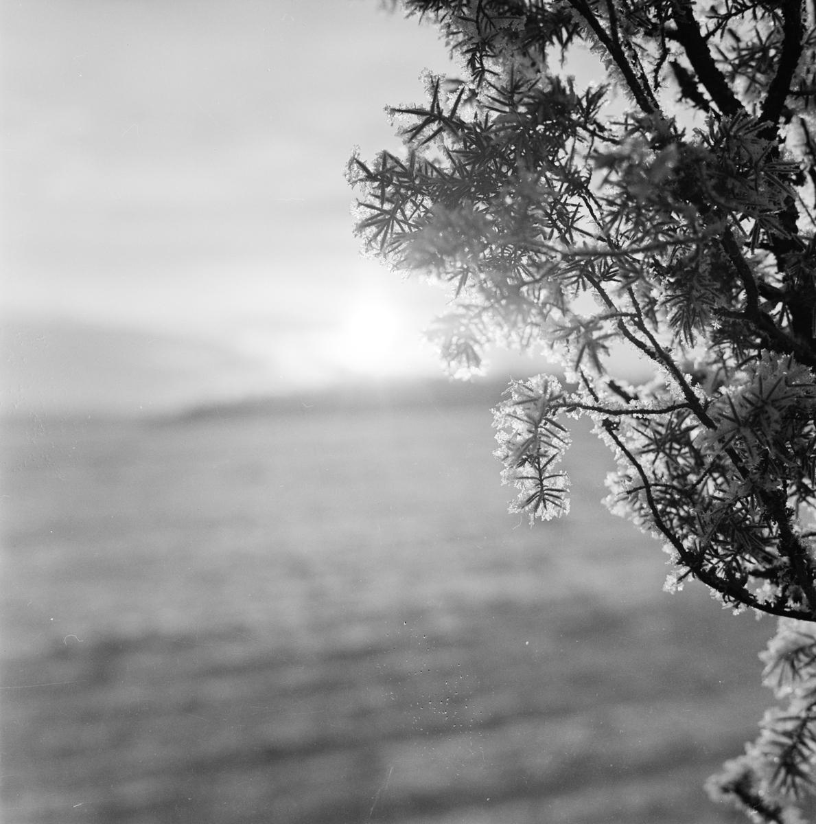 Vinter, Uppsala 1962