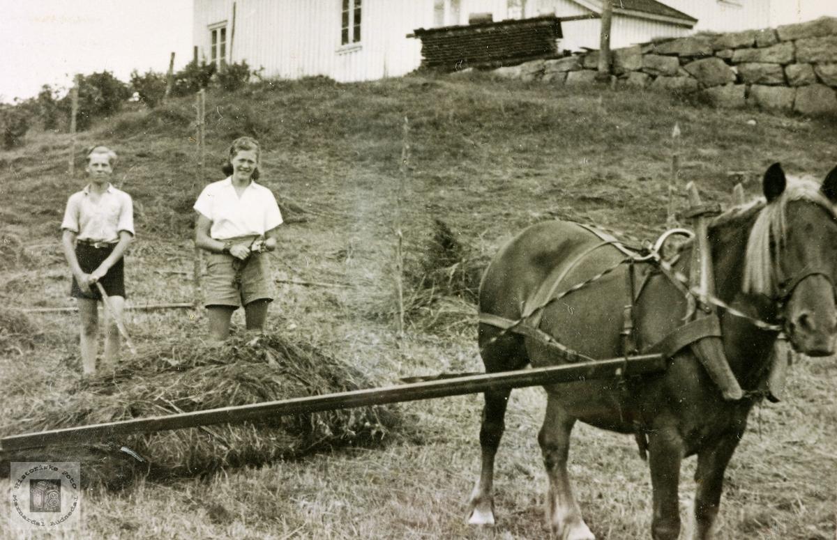 Med hest og sleperive. Grindheim.