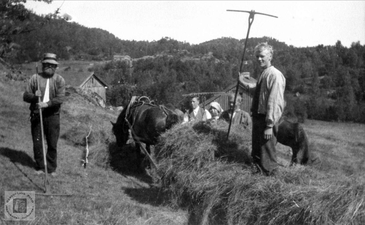 Høying på Løbakken, Sangesland Laudal.
