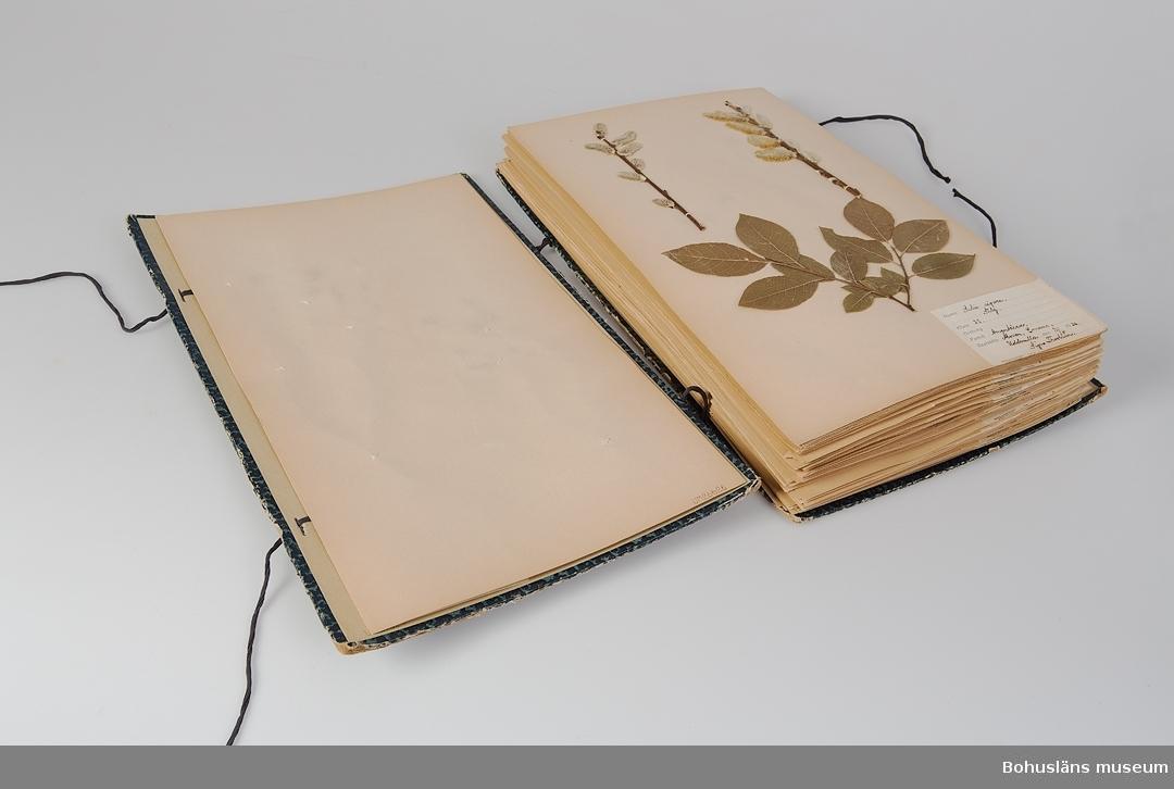 """Blå mapp i hård papp. Två blå bomullsband håller ihop mappen och knyts i ena sidan. Etikett på framsidan med text: """"HERBARIUM SIGNE THORBURN KLASS 3 o 5"""". Mappen innehåller ett 70-tal olika sorter torkade och pressade växter. (Endast ett urval är fotograferade och presenterade med bild år 2014.) Varje blad har en etikett med uppgifter om artens namn, familj, växtställe, datum samt namn på den som plockat växten. På insidan mappen, i den främre pärmsidan är det bland annat en stämpel som visar att den är köpt hos J.F. Hallmans Bokhandel i Uddevalla. S. Thorburn var elev vid Uddevalla kommunala flickskola. """"Undertecknad var under 1934-1940 elev vid dåvarande Uddevalla kommunala flickskola. I årskurs 3 skulle man då ha pressat 25 växter och i årskurs 5 ytterligare 50 stycken. Under läsåret förhördes man individuellt och noggrannt på dessa av biologilärarinnan Elvira Aronsson (gift Kauffeldt). I samband med mitt 55-årsjubileum av studentexamen vid Uddevalla Högre Allmänna Läroverk passade jag på att överlämna herbariet. Uddevalla 1998-05-28. Signe Thorburn-Timgren."""" Brukaren/givaren bodde under uppväxtåren S:t Mikaelsgatan 3, Uddevalla.  Syftet med att samla inhemska växter, pressa dem och skapa herbarium var en del i inlärningsprocessen."""