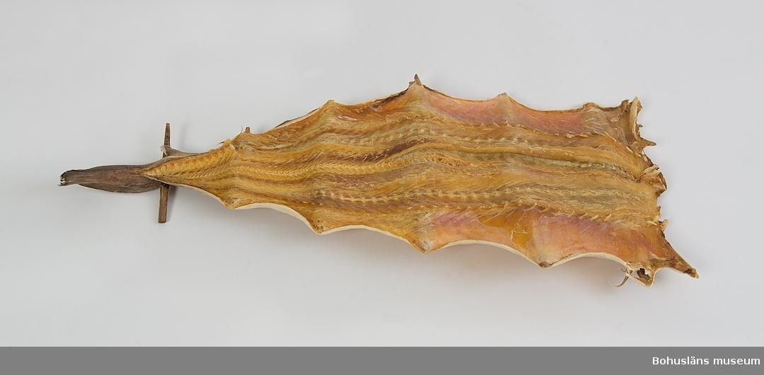 En spillånga, torkad långa, fläckt och spilad med sex täljda spilor, troligen gran.  Ingen är brännmärkt med ägarinitialer. Längd: Mellan 50-60 cm. Bredd: 20-35 cm. Tillhörande nytillverkad hänka, kopierad efter äldre förebild. Materialet kommer från en äldre, tjärad  backelänk. Den spilade långan hängdes i torkställningen i denna typ av  hänka.