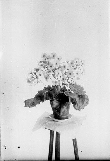 Blommande krukväxt på piedestal