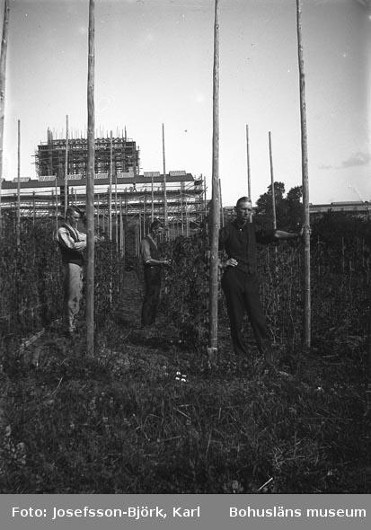 Tre trädgårdsarbetare, Trädgårdsföreningen i Göteborg