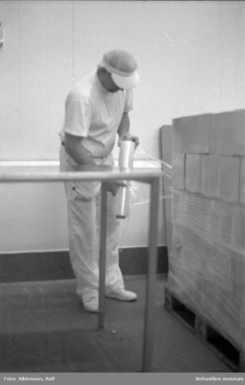 """Enligt fotografens noteringar: """"Erik Flatting plastar en pall med fiskgratänger som han fått på bandet från Ingrid Lindström i rummet intill, (se bild 217 på denna film) .....""""  (AC. Fortsättning bild 228). Fototid: 1996-01-19."""