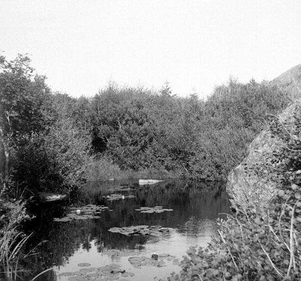 (Stereo karta XVII) Skogstjärn söder om S:t Eriks park. 27 Augusti 1926.
