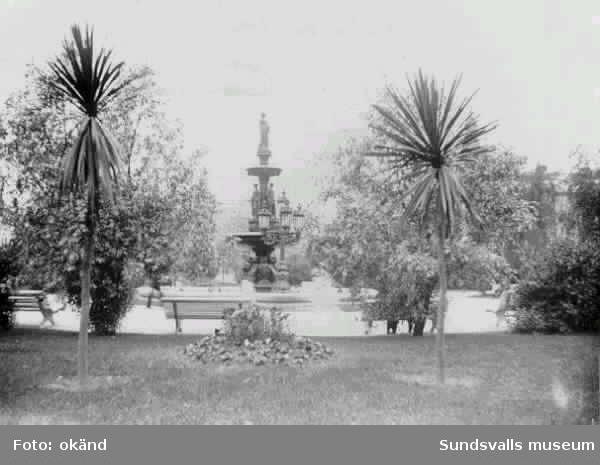 Parken Vängåvan med palmer omkring år 1920.