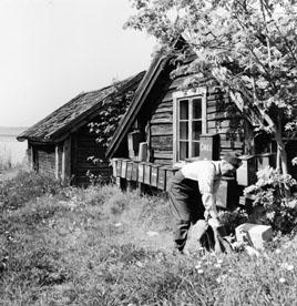 Brevlådsamling vid Östra Lagnö. Lantbrevbärare (cyklande) Sven Eriksson, från Ljusterö, under brevbäringstur mellan Västra Lagnö till Lagnö Ö (c:a 7 km).