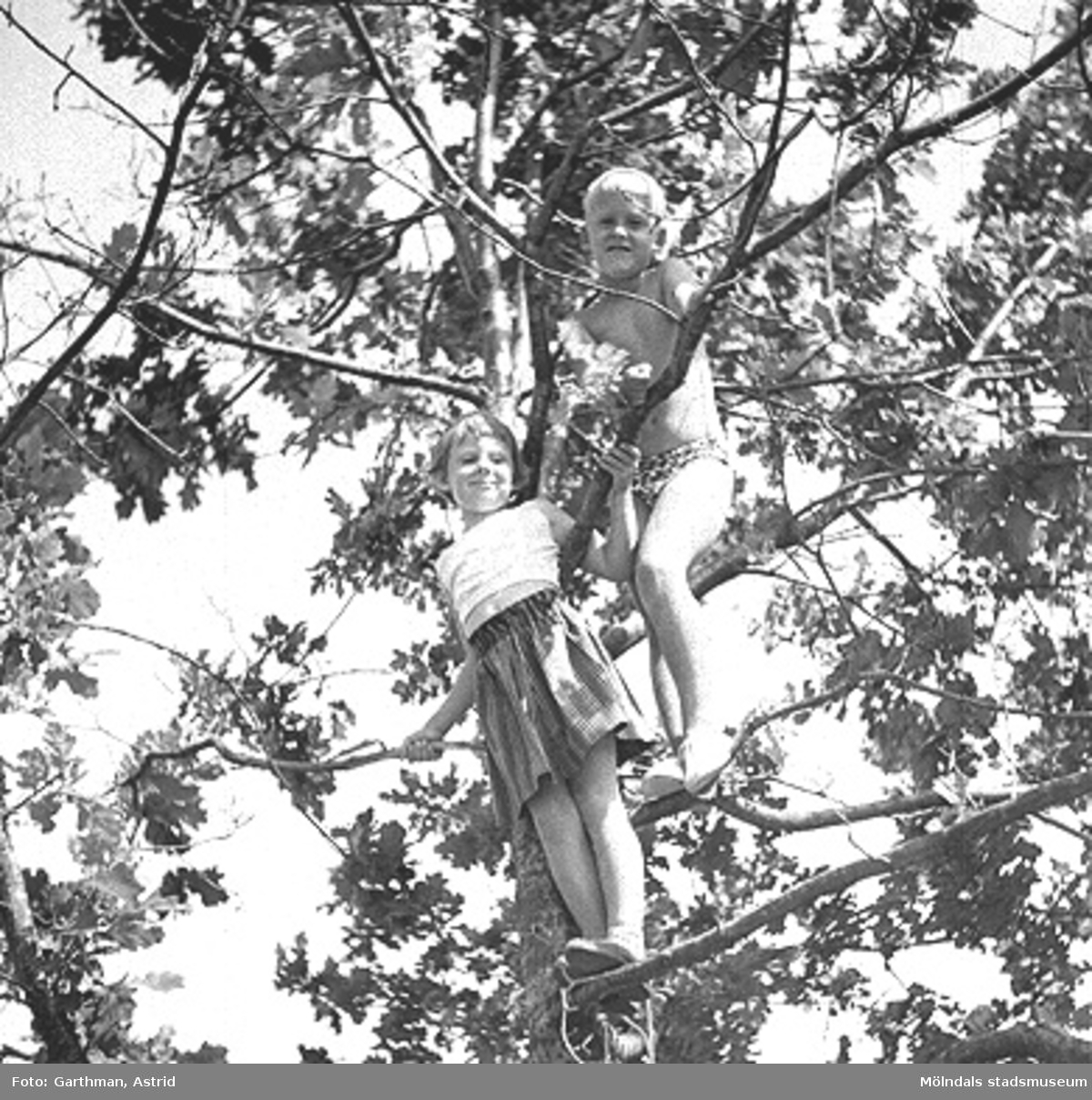 Familjen Garthman är på besök hos Sven Torgé i dennes sommarstuga på Orust under 1950-talet. Svens barn är uppe i ett träd.