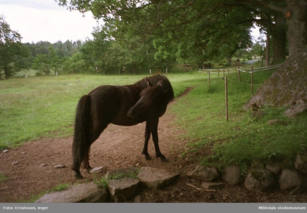 En häst i en hage tillhörande Gunnebo slott, 1995.