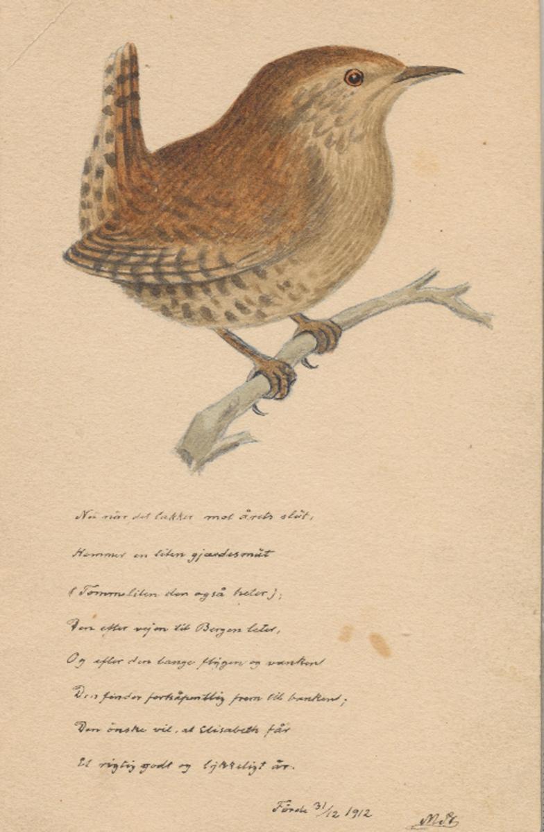 Teikning av fugl på grein