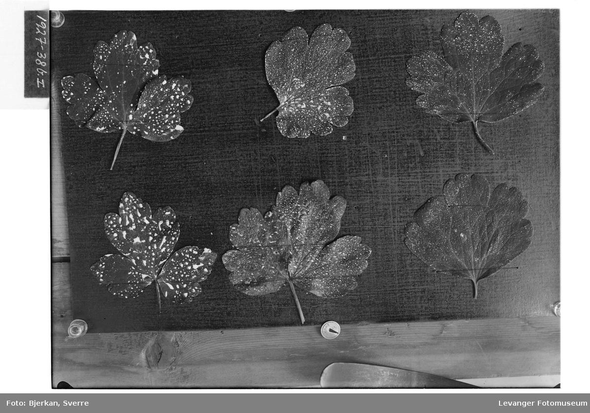 Blader på kartong II