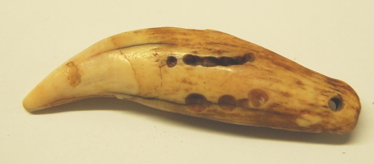 Isbjørntann med hull til tråd for å kunne brukes som anheng. I tannen er det laget enkelte merker som dekorasjon.