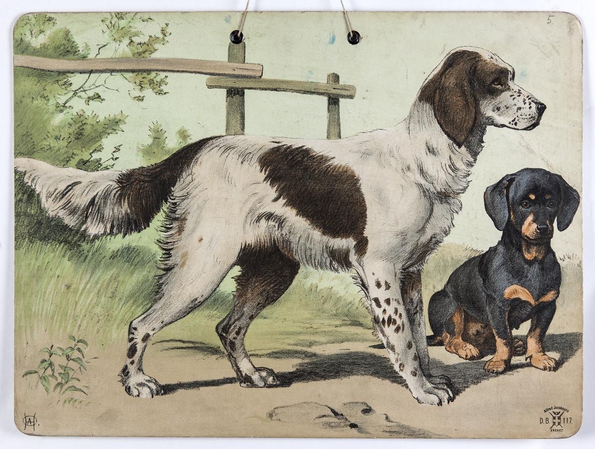 Skoleplansje, naturfag. Illustrert på begge sider, forestiller geit og kje i gårdsmiljø (119) og hunder (Nr. 117).