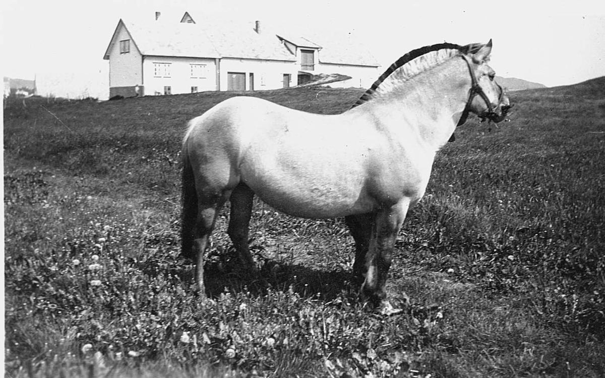 Hest - Landskap - Vibrandsøy.