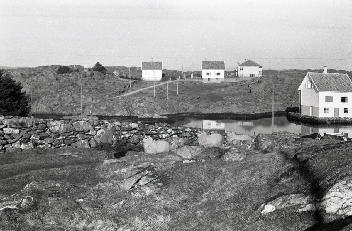 Feøy i Karmøy kommune - landskap - hav - skole - bebyggelse.