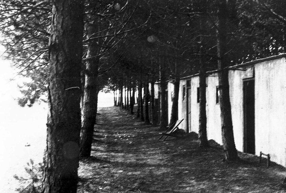 Gårdsplass.Trær foran bygning.