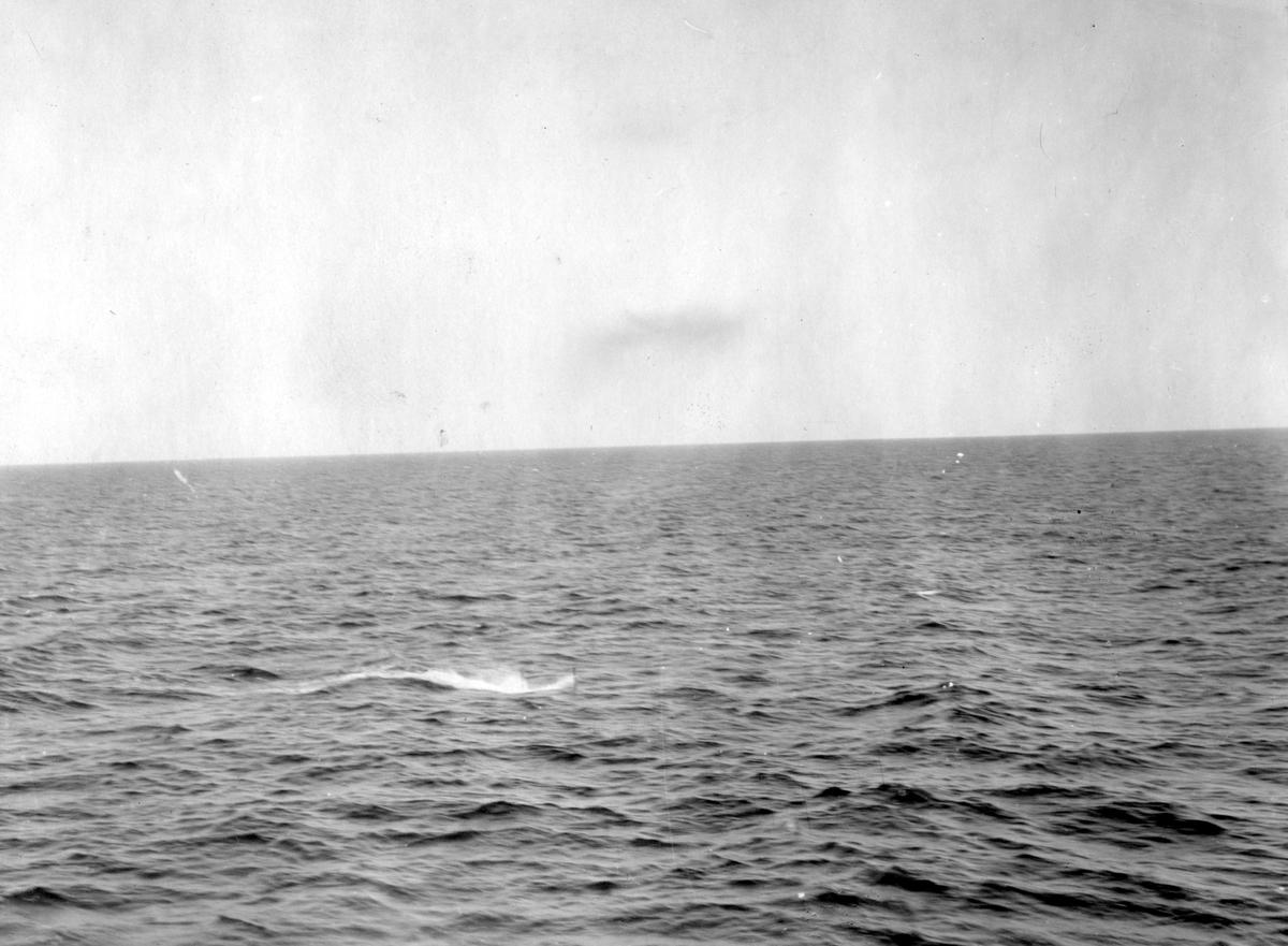 Fartyg: VALROSSEN                       Övrigt: Valrossen, periskop i vattenbrynet