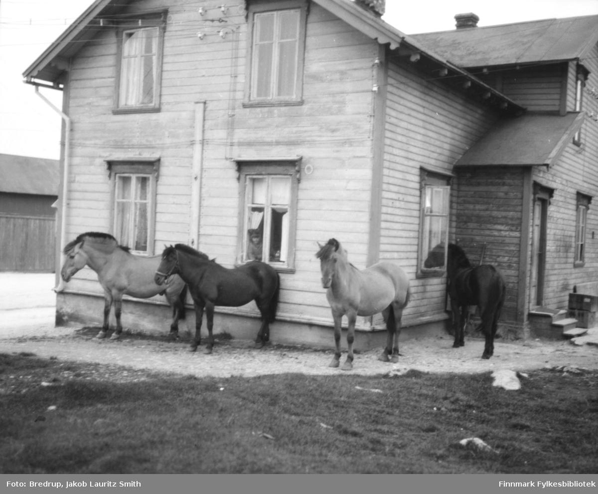 Bildet er tatt i Kaigata i Vardø.  Fire hester står utenfor, den ene stikker hodet inn gjennom vinduet.  I et annet vindu sitter ei lita jente og ser ut på hestene.