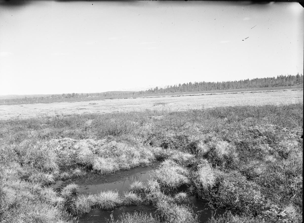 Biotop för myrspov