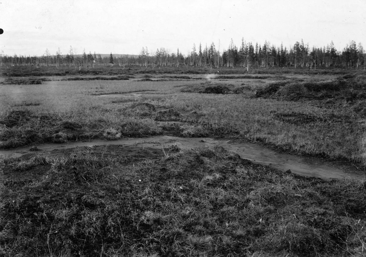 Biotop för småspov, Numenius phaeopus, / Kan ej tyda ordet)       Allavara, Lappland 19 juni 1909