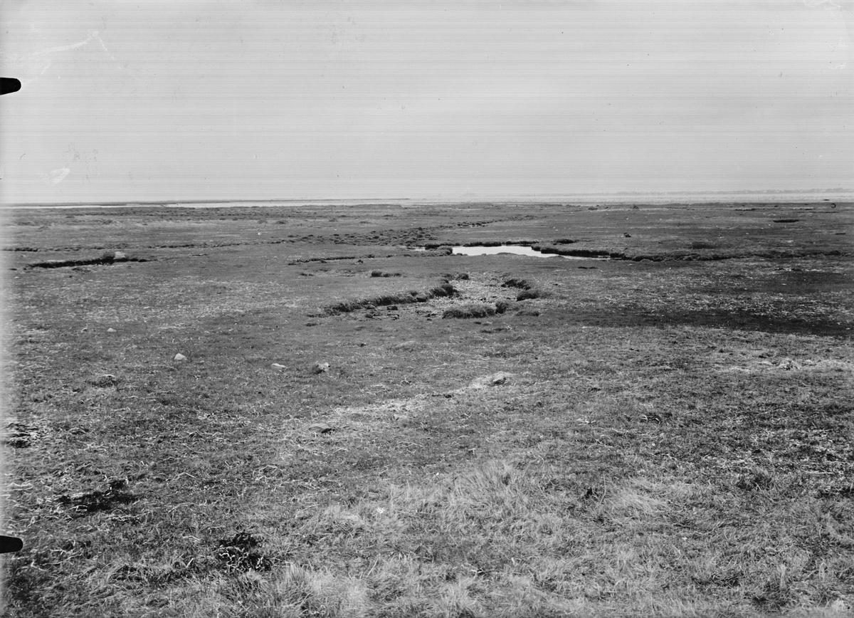 Biotop och boplats för kärrsnäppa, Tringa alpina,                      Hammarsnås, 5 maj 1931, Falsterbonäset                                   X=boet