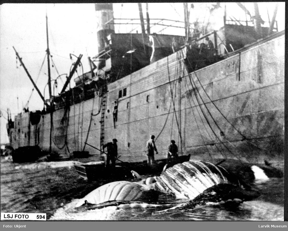 Flensing av hval ved ukjent hvalkokeri