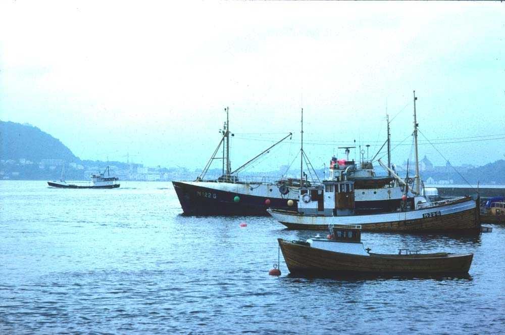 Landskap. Ålesund. Store og små fiskefartøyer ankret opp i havna.