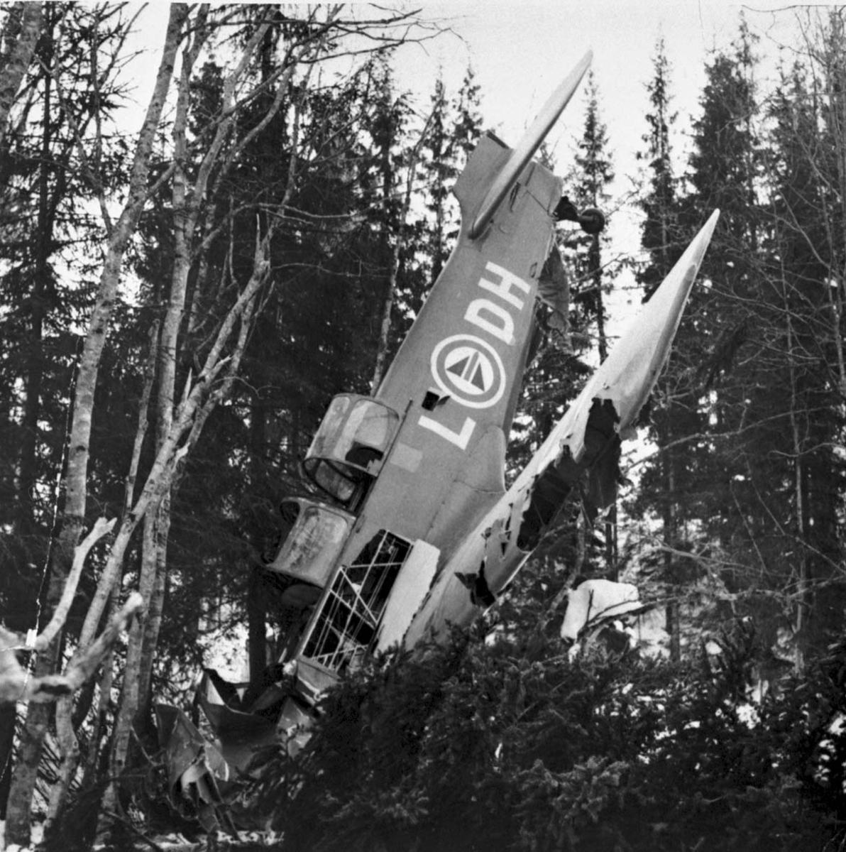Havari - flyvrak. 1 fly på bakken mellom noen trær. Nesepartiet ned i bakken. Fairchild Cornell L-DH fra RNoAF.