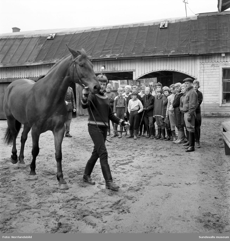 Norrlandsbild  Sundsvalls Ridklubb bildades 1945 och ridhuset låg då där Sporthallsbadet nu är medan stallarna låg där Västermalms skola finns i dag. 1953 startades ridklubben Sporren som en junioravdelning till SRK. Ungdomarna hade ridundervisning för medlemmarna som rekryterades från läroverket, flickskolan och folkskolorna. 1957 flyttades hästarna till Kubikenborg och reds varje dag ner till ridhuset. 1966 revs det gamla ridhuset och hela verksamheten flyttade till Kuben och ridlektionerna hölls då utomhus. 1970 flyttade ridklubben till Kungsnäs i Selånger där det först 1977 stod ett nytt ridhus klart att invigas.