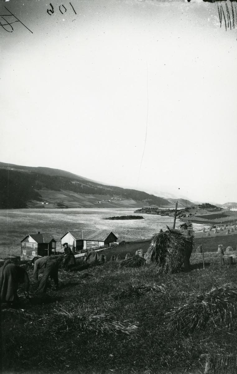 3 personer i arbeid på åkeren. Fra Stavenjord i Ulnes øst, Nord-Aurdal. Granheimsfjorden og Granheimsgardene i bakgrunnen.