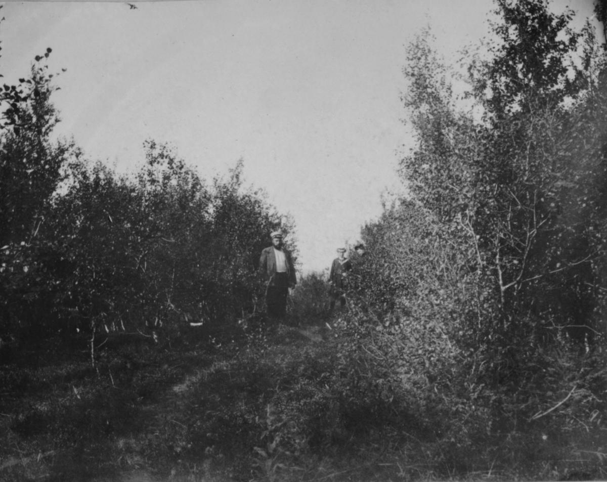 Turister på skogtur. Tårnet 1906.