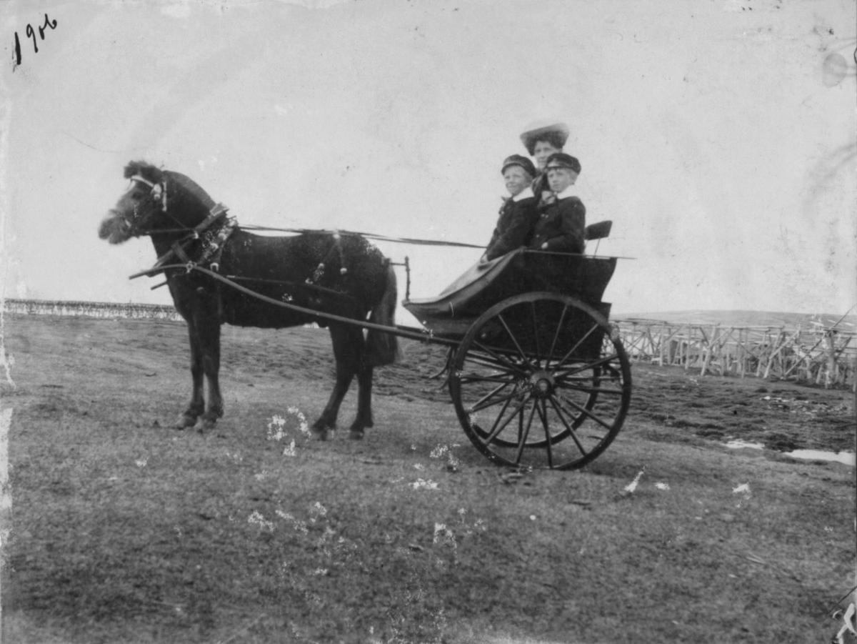 Tommeliten Hest med vogn bak. En dame og to gutter sitter i vogna.Hjeller i bakgrunnen.