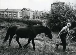 Svanbom & Sylvester. Trädgårdsmästeriet på Wallinsgatan. Syl