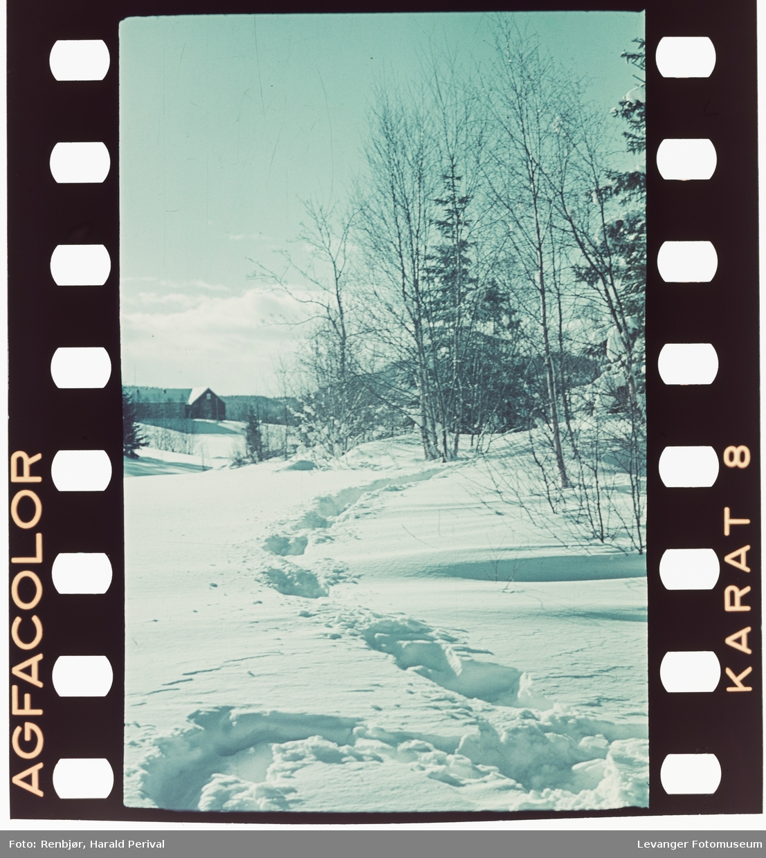 Spor i snøen.