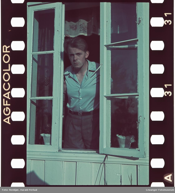 Per Renbjør i vinduet.
