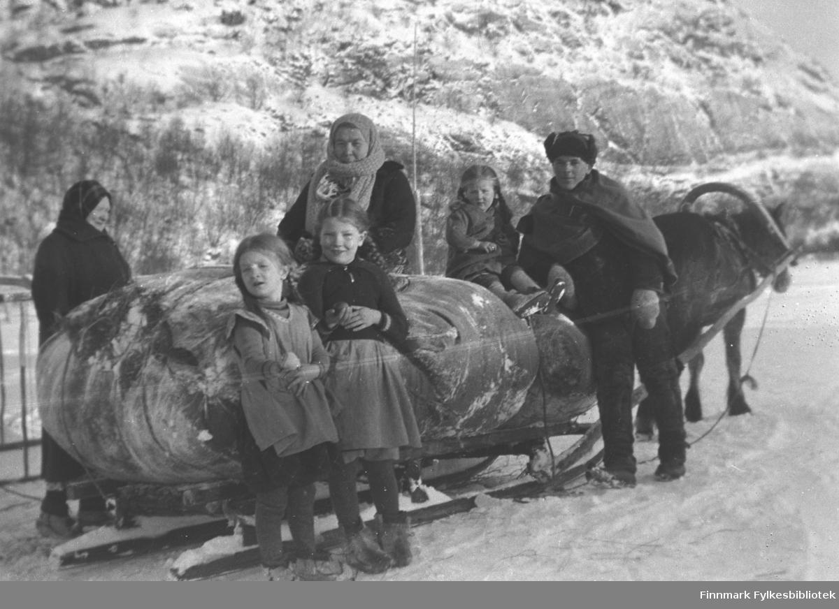 Hesten Borken er forspent en slede lastet med en stor loddenot. Fra venstre: Kathinka Mikkola, Astrid og Ingrid Mikkola, Amanda Olsen Lie, Herlaug og Leif Mikkola