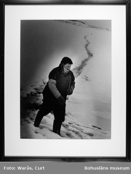 Öbo på väg med sin kälke över den sörjiga havsisen in till Havsstensund februari 1981