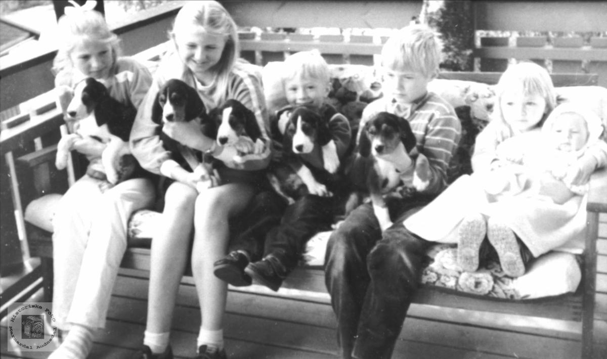 Barn og hundevalper på Skuland. - Historiske Foto ...