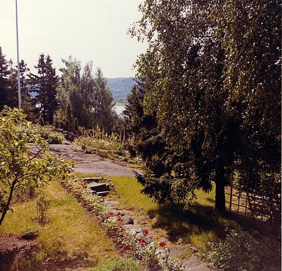 Sommaren 1964. Utsikt från trappa i söder, väster äppelträd och vinbärsbuskar. På andra sidan berget hallonbuskar. Till höger den stora björken som nu är enorm och snart ska bort, berså med vita möbler. Morfar Erik lade gärdesgården av sten hela östsidan och del av sydsidan.