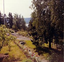 Sommaren 1964. Utsikt från trappa i söder, väster äppelträd