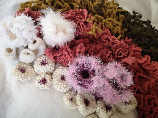 Bilde av anemonepute i utstilling til Oppdag havet (Foto/Photo)