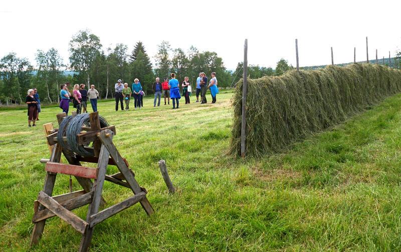 Småsetran (Foto/Photo)