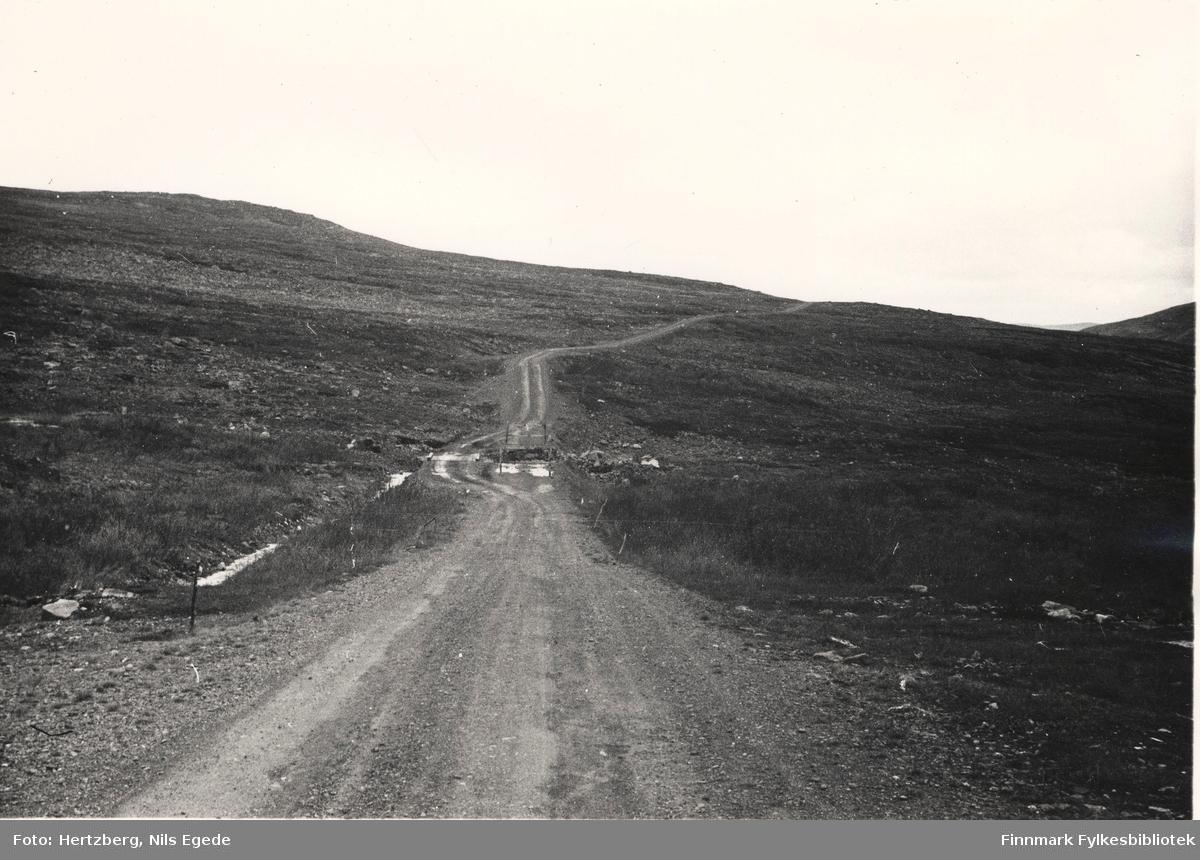 Rv. 50 Ifjordfjellet km 18. Grusveien går langs fjellelandskapet, 1946.