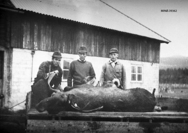 Elgjakt. Halvor og Magnar Strypet, Per Edvard Øien. Premie. gevir. 1968. (Foto/Photo)