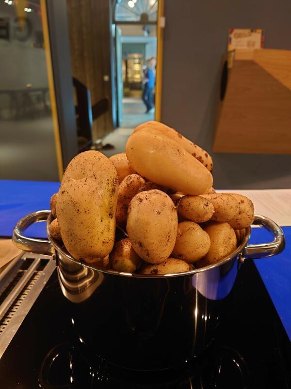 En kjele med poteter (Foto/Photo)