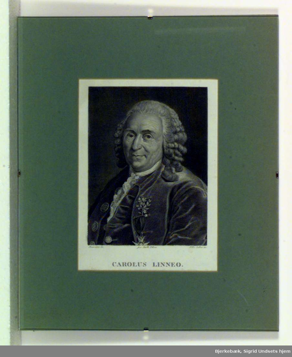 Portrett av Carl von Linné