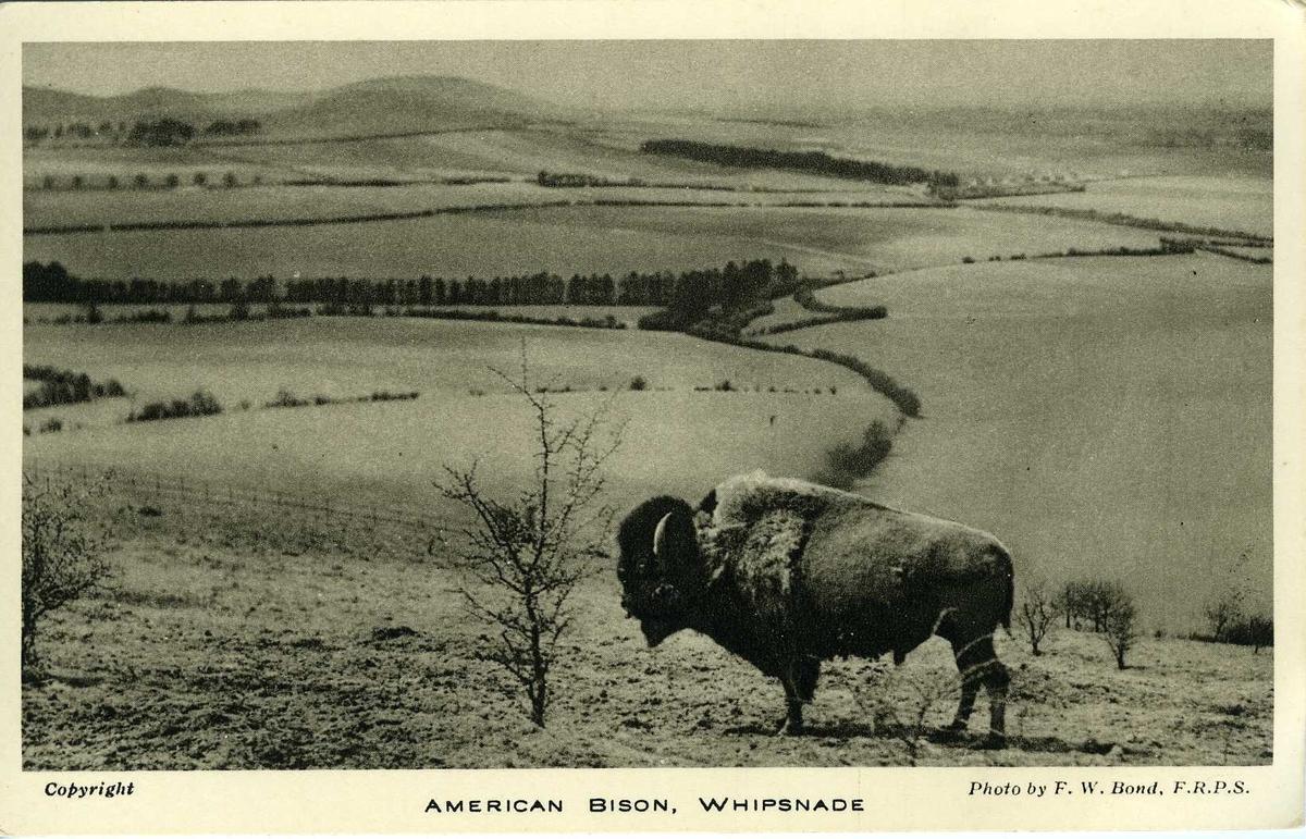 Postkort med dyremotiv