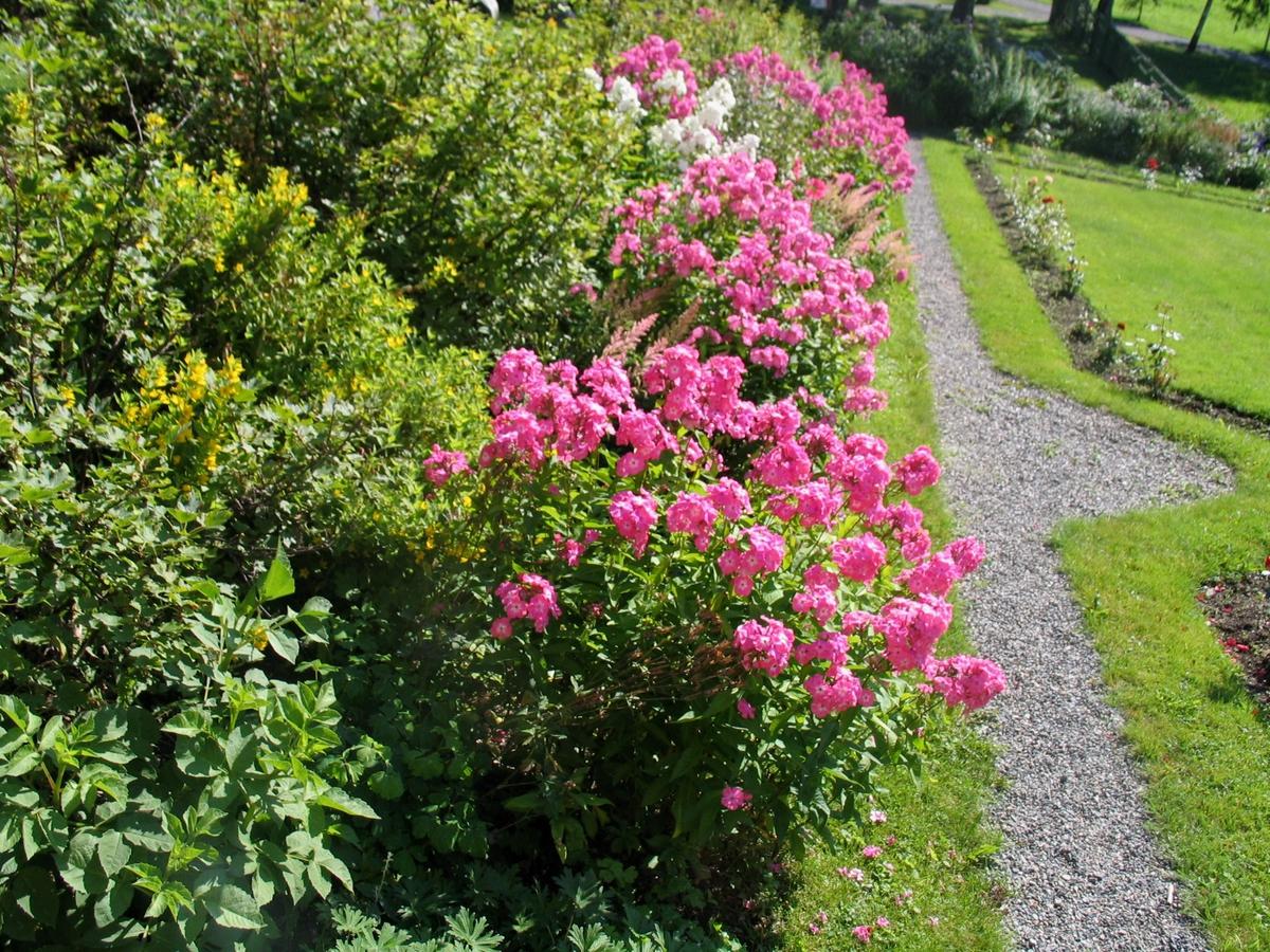 DOK:2007, Aulestad, hage, blomster, staudebed,